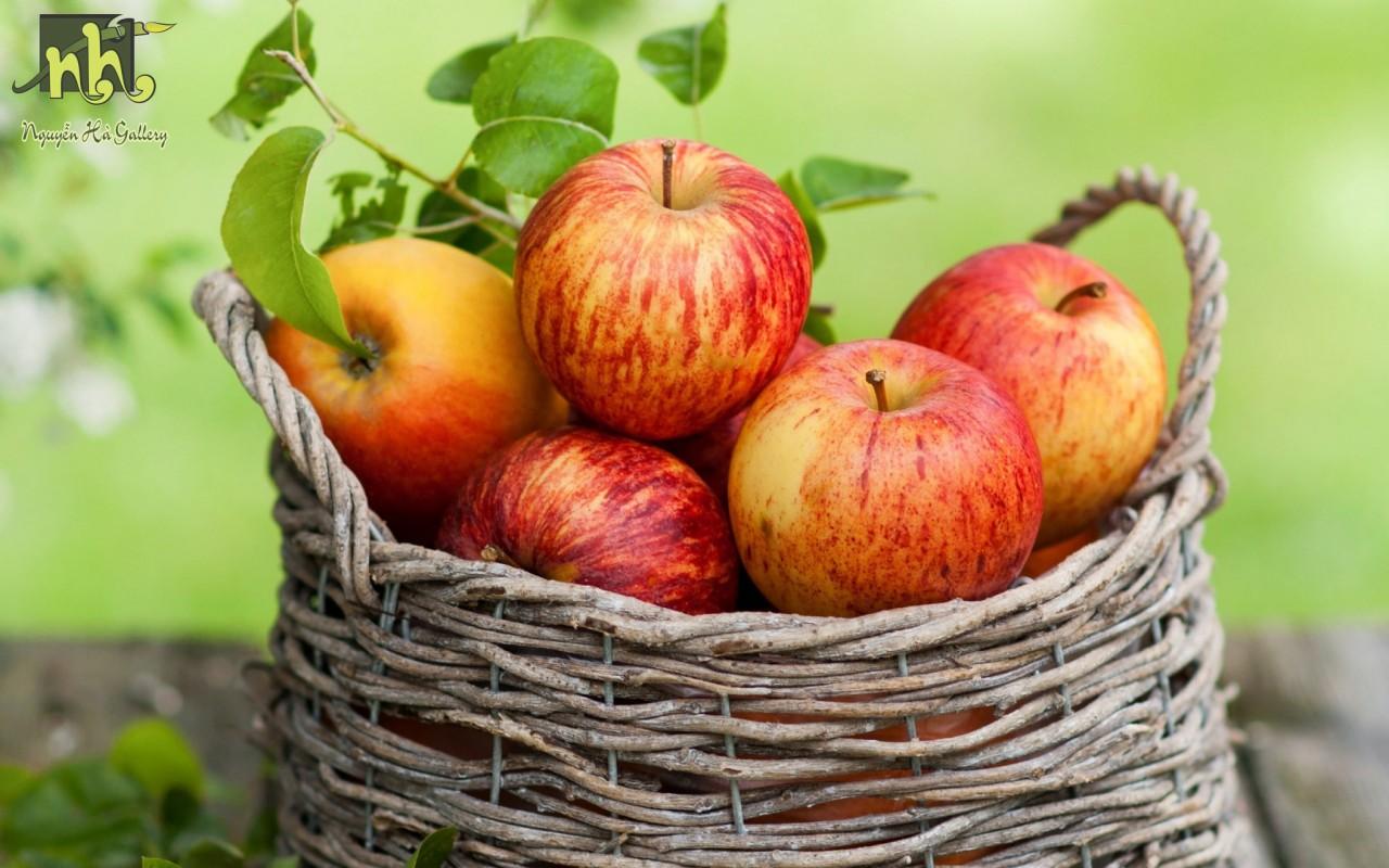 Tranh tĩnh vật giỏ táo